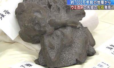 fossile-Japon-tortue-70millions d'années