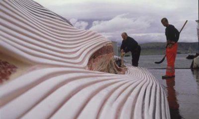 Alma-islande-japon-baleine