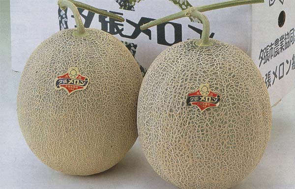 melons-yubari