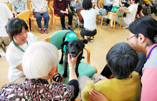 assurance-chien-japon_mini