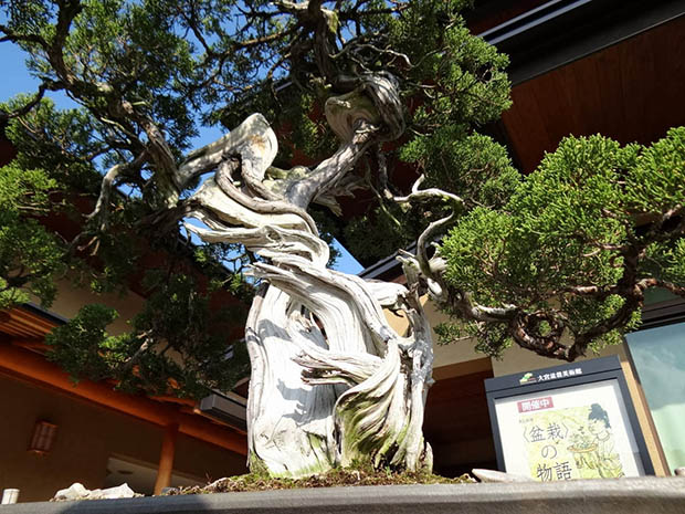 bonsai-japon-3