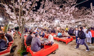 hanami-Japon-cerisiers