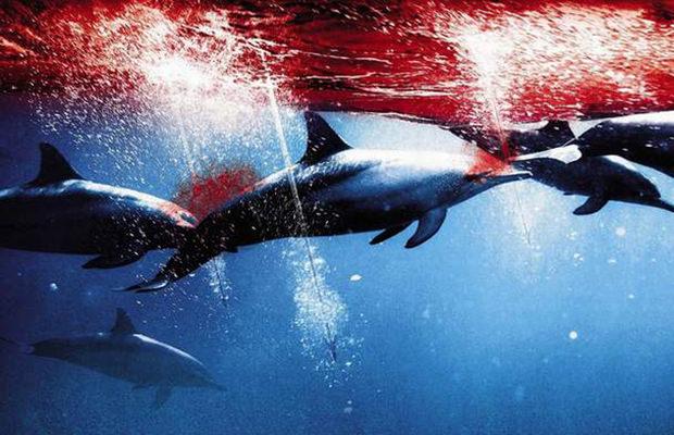 Le Massacre Des Dauphins Une Vérité Qui Dérange