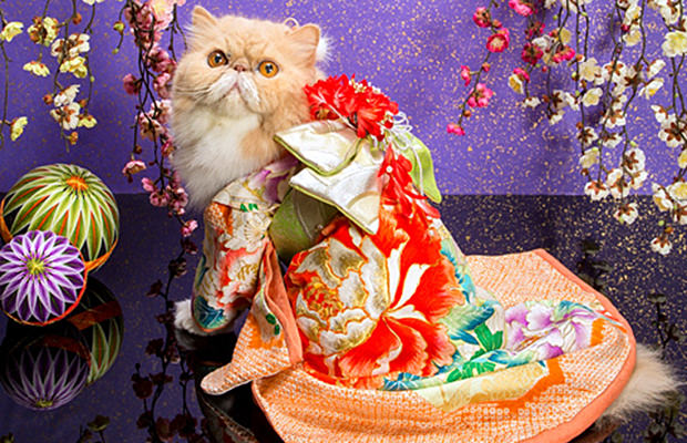 chat-kimono-japon