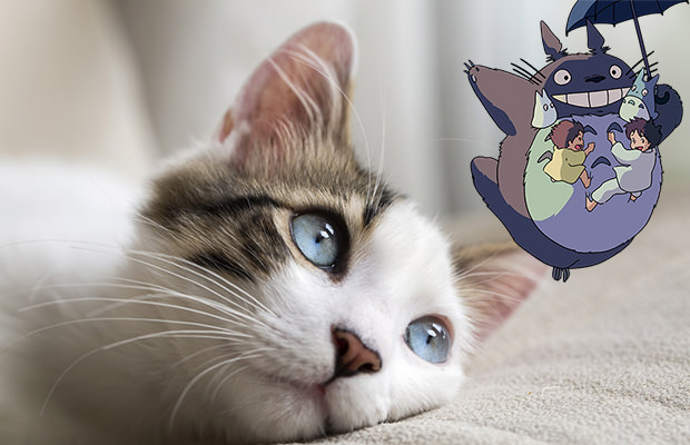 transformation-chat-totoro-ghibli