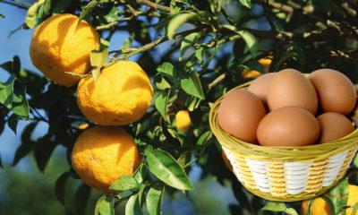 oeufs-yuzu-japon-citron-pamplemousse