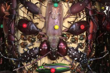 statues-insectes-japon-artistes2