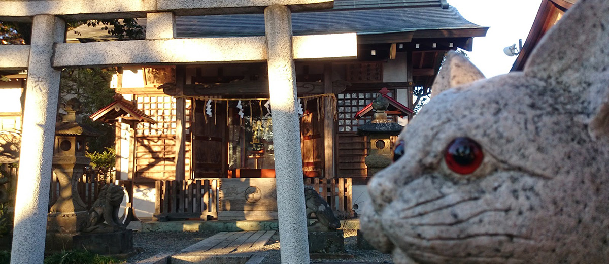 temple-japon-chats-perdus