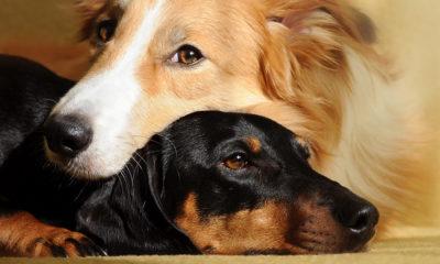 speed-dating-japon-chiens-Japon-Tokyo