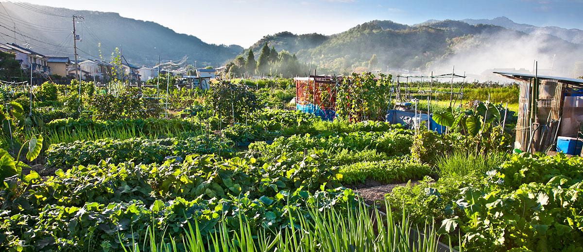 agriculture-japon-sans-emploi-sdf-aide