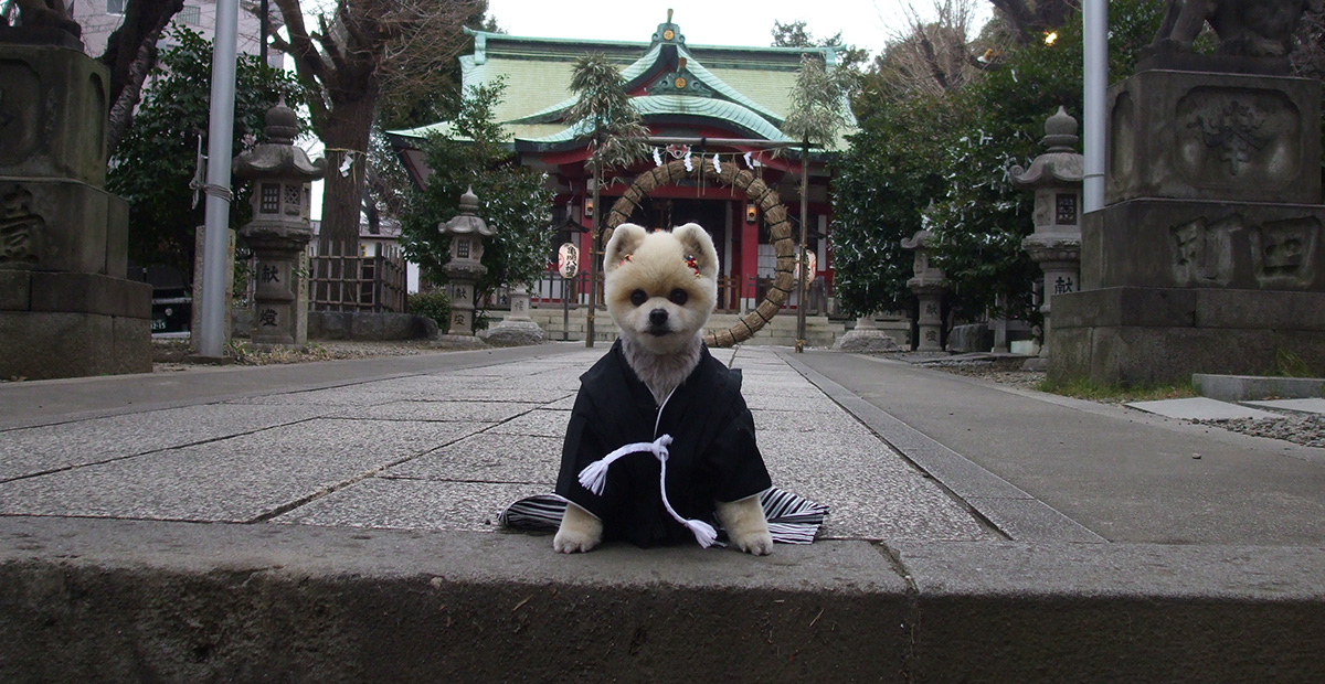 ceremonie-shichi-go-san-chiens-animau-japon