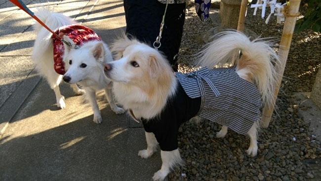 kimono-chien