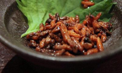 hachinoko-larves-insectes-plats-japonais-nagano