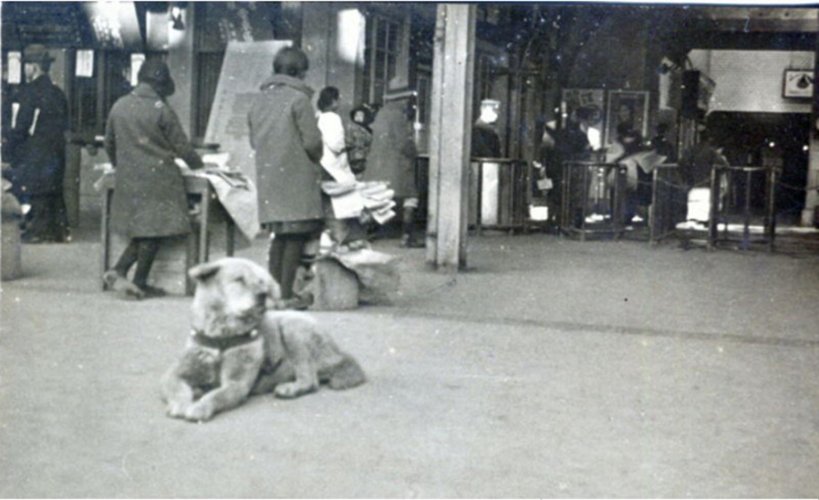 Sur cette photo datant de 1934, Hachikô est couché devant la gare de Shibuya à proximité de passants qui ne lui prêtent pas attention.