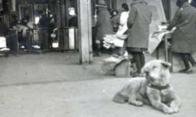 hachiko-chien-japon-shibuya-photo
