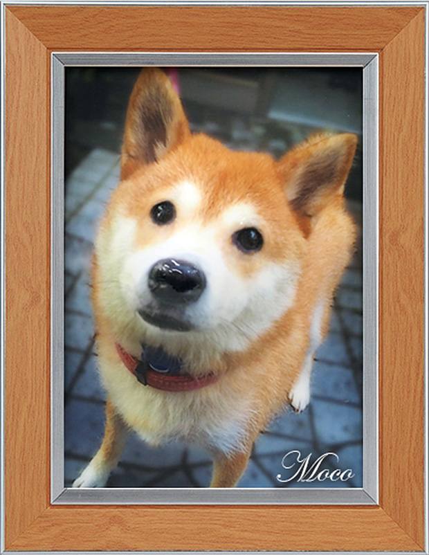 photo-relief-chien-idee-cadeau-japon