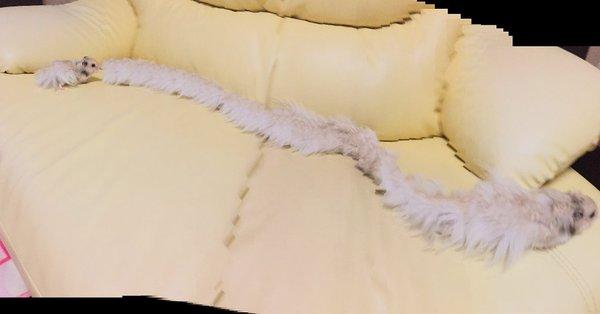 Voilà ce qu'il se passe quand vous prenez une photo panoramique d'un hamster qui court.