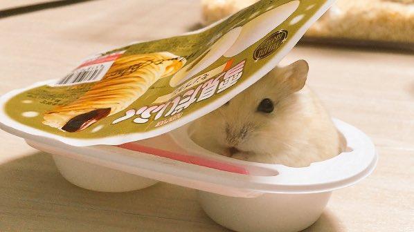 S'il y a un endroit où se cacher, votre hamster le trouvera.