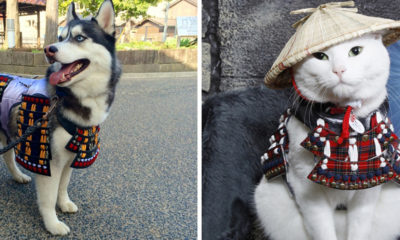 armures-samourai-chiens-chat-japon
