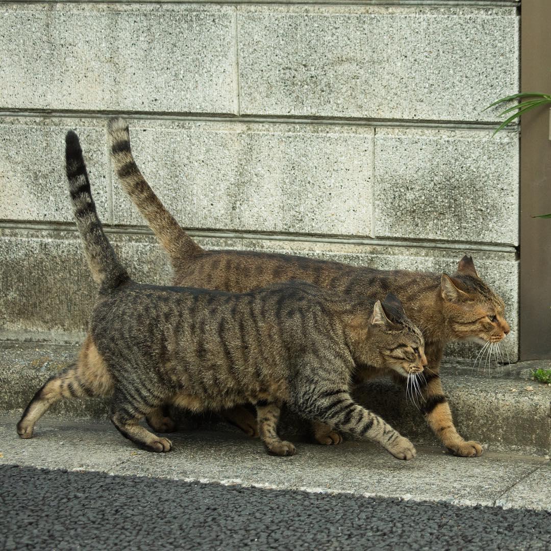 chat-japon10