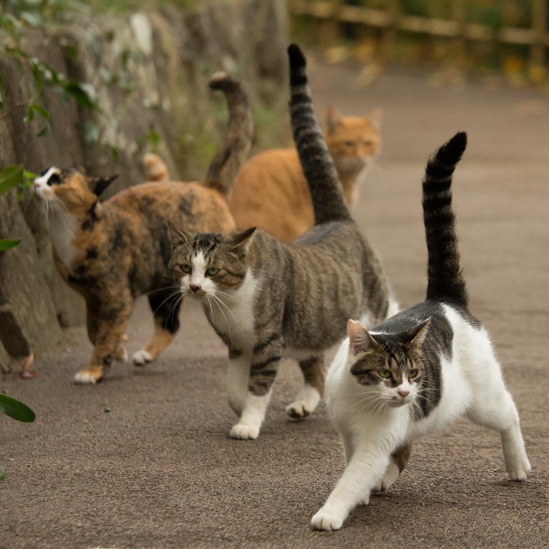 Ces chats ne déplacent-ils pas tels des top-modèles sur un podium ?