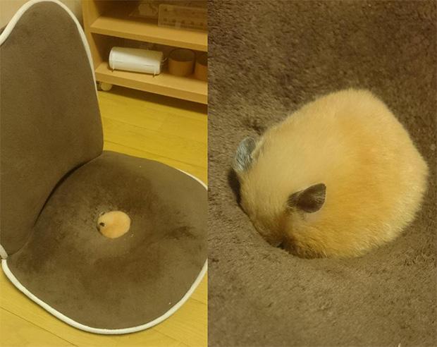 hamster-kawaii-japon