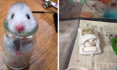 hamster-mode-japon-2015-kawaii-animaux