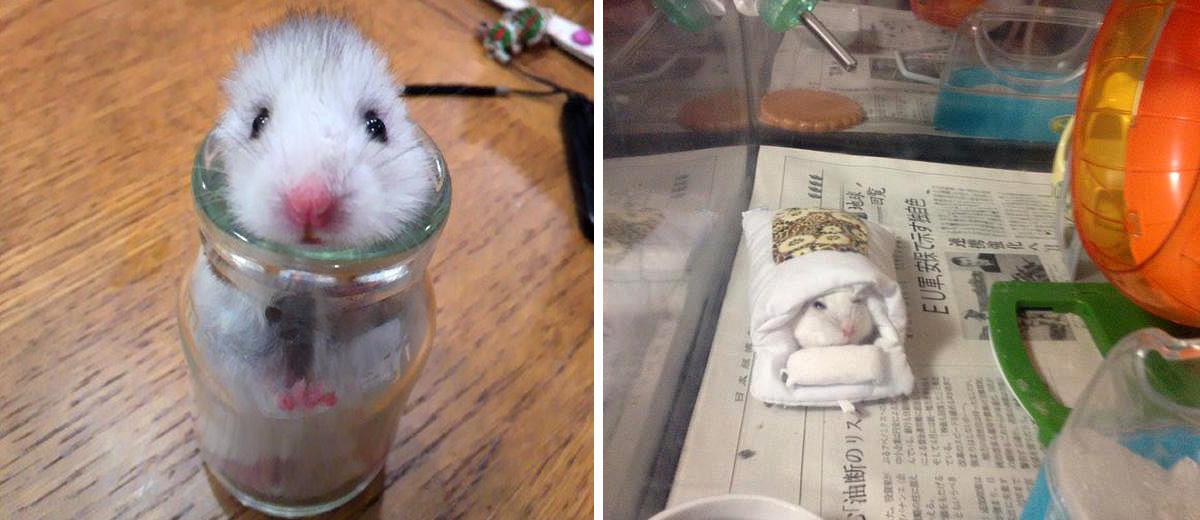 hamster-mode-japon-2015-kawaii-animaux