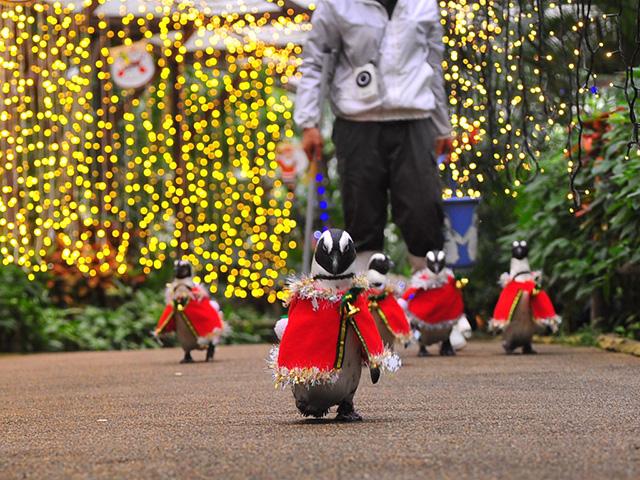 pingouins-japon-1