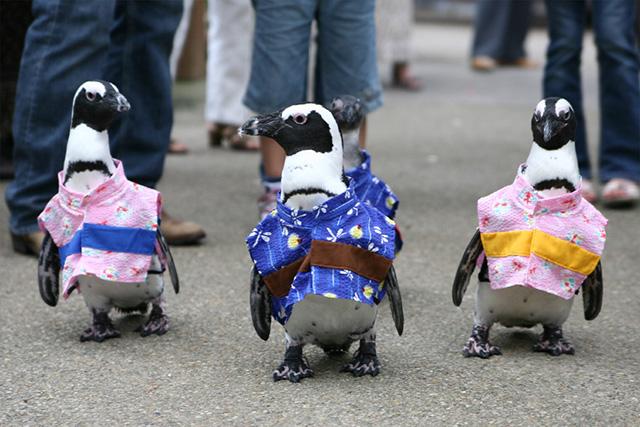 pingouins-japon-5