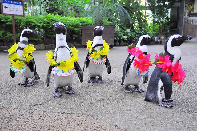 pingouins-japon-6