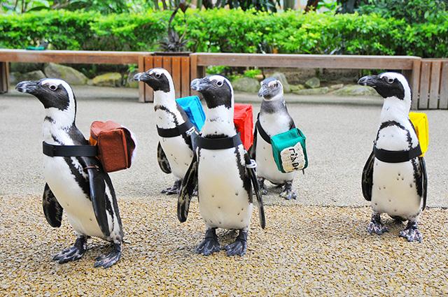 pingouins-japon-8