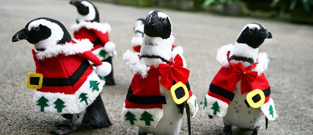 pingouins-noel-japon-matsue-vogel-park-japon