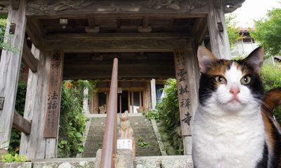 temple-chat-fidele-hachiko-samourai
