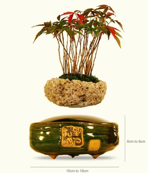 air-bonsai-2