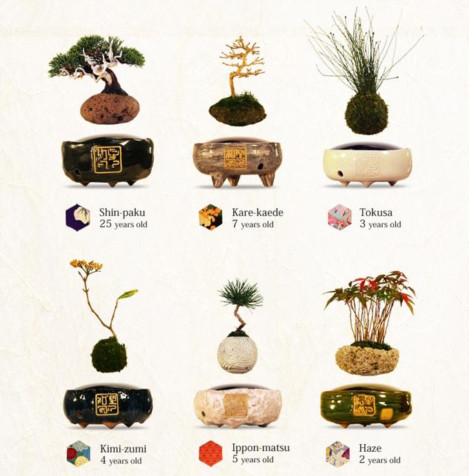 air-bonsai-volants-levitation-japon