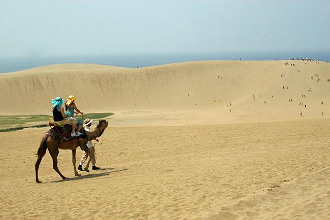 chameau-dunes-tottori-japon