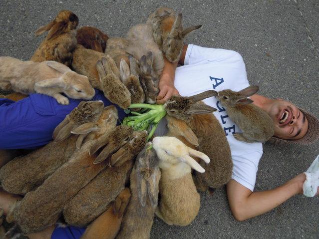 ile-lapins-hiroshima