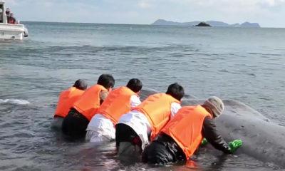 sauvetage-baleine-japonais-japon-peche