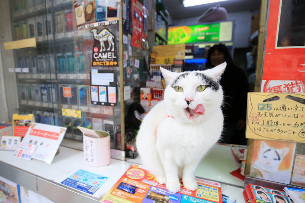 chat-hachi-porte-bonheur-mito-3