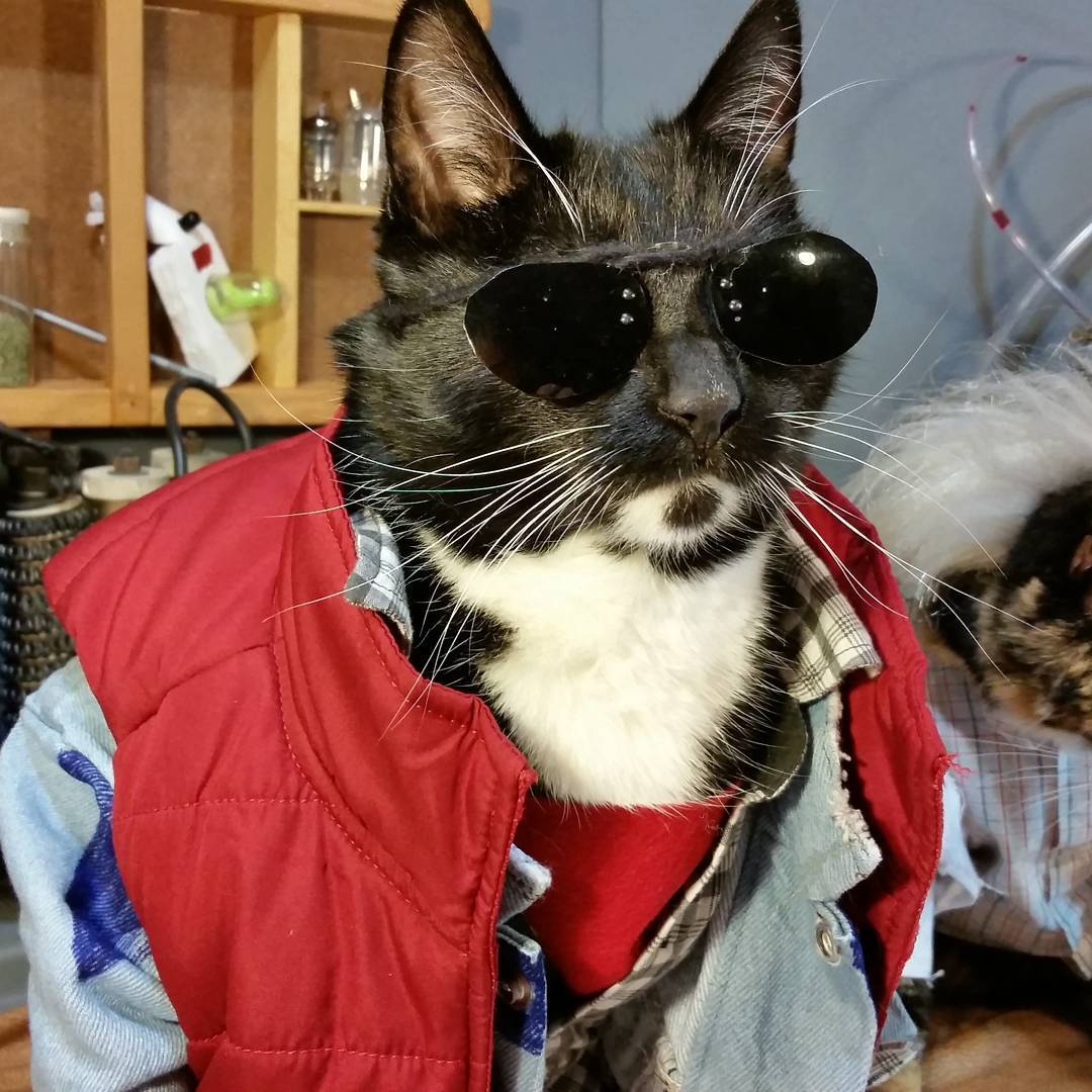 cosplay-chat-retour-vers-le-futur-martymcfly