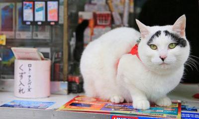 hachi-chat-porte-bonheur-mito-Japon