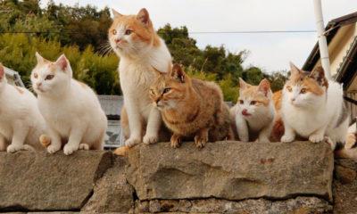 iles-aux-chats-nekojima-japon-tourisme-voyage