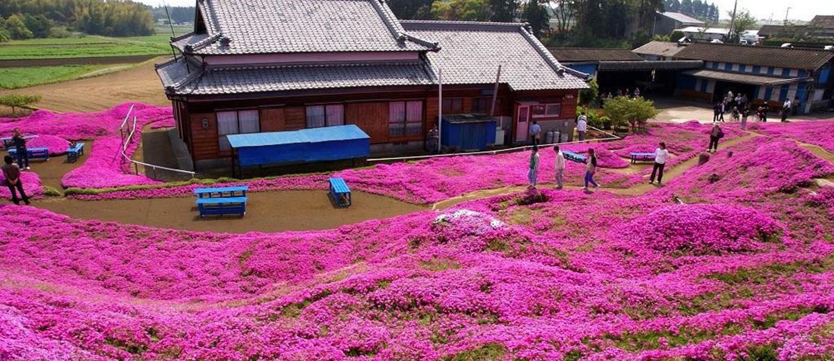 jardin-fleurs-amour-couple-Japon