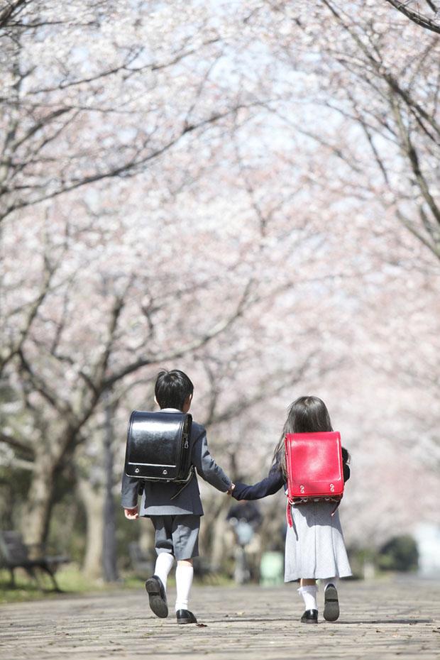 cerisiers-fleurs-sakura-hanami-Japon (1)