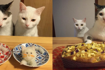 chats-Japon-repas-kawaii