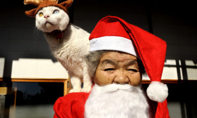 misa-fukumaru-Japon-chat-grand-mere-photos