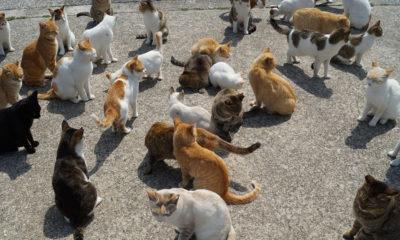 ainoshima-touristes-Japon-fukuoka-chats-iles