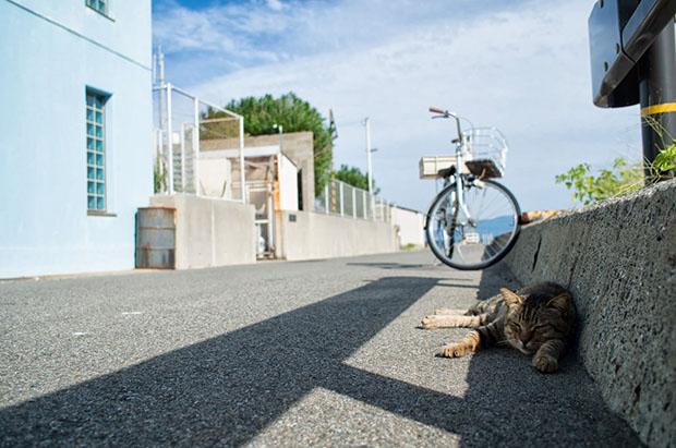 chats-ainoshima