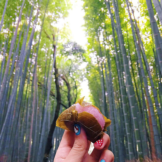 Sakura mochi, Fôret de bamboo d'Arashiyama (Kyoto)